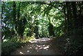TQ0048 : North Downs Way (Pilgrims' Way) through Chantry Wood by Nigel Chadwick