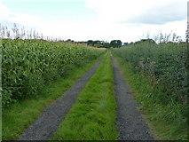 SJ8270 : Footpath, farm track and maize near Shellmorehill Farm by Richard Law