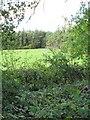 NS8051 : Woodland, Brownlee by Richard Webb