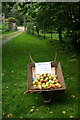 Dist:0.1km<br/>A surplus of apples, and passers-by in Great Livermere are invited to partake of this juicy crop.