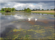 SO8843 : The Croome River at Croome Park by Trevor Rickard