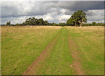 SO8944 : Track in Croome Park by Trevor Rickard