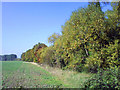 SP6100 : Hedgerow near Little Milton by Steve Daniels