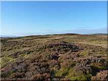 SH8414 : The summit 'ridge' of Foel Dinas by Richard Law