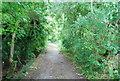 TQ1776 : Thames Path to Richmond by N Chadwick