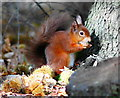 SZ0287 : Secret Squirrel : Week 42