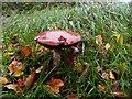 G8854 : Fungus, Rusheen Point by Kenneth  Allen