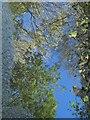 SX7880 : Puddle near Packsaddle Bridge : Week 43