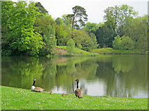ST9770 : Bowood Lake - 2 by Trevor Rickard
