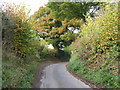 TQ1116 : Oaks on bend in Rectory Lane approaching Warminghurst Church by Dave Spicer