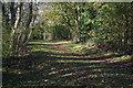 ST5377 : Penpole Wood by Stephen McKay