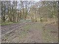 SP8305 : Footpath in Whorley Wood by Shaun Ferguson