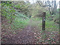TR1536 : Footpath towards Heane Wood by David Anstiss