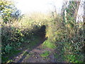 ST5856 : The Limestone Link footpath to White Hill by Dr Duncan Pepper