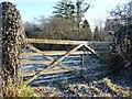 SJ7862 : Frosty gate into a frosty field by Christine Johnstone