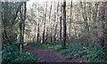 SU9187 : In Farm Wood by Graham Horn
