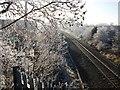 SP2971 : Frost alongside railway line by John Brightley