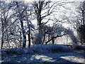SP2872 : Frost on trees by Finham Brook in Abbey Fields by John Brightley