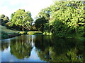 ST5575 : Sneyd Park nature reserve - looking over the pond by C P Smith