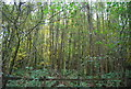 TQ6532 : Bewl Woods by Nigel Chadwick