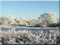 SO9095 : Hoar frost near Colton Hills, Wolverhampton by Roger  Kidd