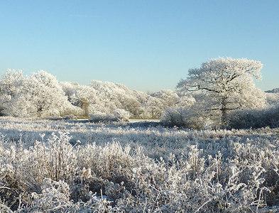 SO9095 : Hoar frost near Colton Hills, Wolverhampton by Roger  Kidd