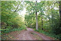 TQ6633 : Sussex Border Path, Frogwell Wood by Nigel Chadwick