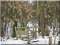 TQ4360 : Kissing Gate into Twenty Acre Wood by David Anstiss