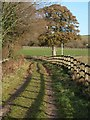 SX8577 : Track past oak, Bellamarsh : Week 50