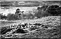 NC8955 : Remains of hut circles above Birchwood, Strath Halladale by Evelyn Simak