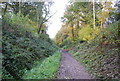 TQ5036 : Old railway cutting, Forest Way by N Chadwick