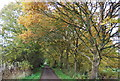 TQ4836 : Autumn colours, Forest Way by N Chadwick