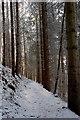 NT2340 : In South Park Wood : Week 51