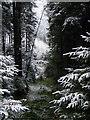 SN8680 : A gap in the trees near Esgair Ychion : Week 1