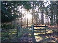 SU2014 : Woodland gate in winter sunlight by David Martin