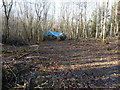 TQ0521 : Coppicing in Toat Plantation by Dave Spicer