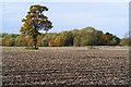 SP7504 : Farmland, Chinnor by Andrew Smith