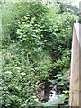 TQ3767 : The Beck north of Cresswell Road, BR3 by Mike Quinn