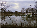 TM4566 : Flooded Marshes at Eastbridge by Adrian S Pye