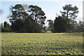 SP2477 : Parkland west of Berkswell House by Robin Stott