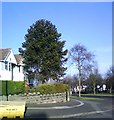 SP0390 : Corner of Cranbrook Rd and Sandwell Rd by araucaria araucana