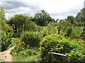 TQ4068 : The Ravensbourne Allotments by Mike Quinn