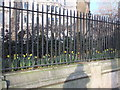 TQ3180 : Daffodils in Temple at Victoria Embankment by PAUL FARMER