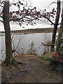 SJ5571 : Across Blakemere Moss by Row17