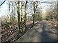 SE1935 : Bridleway through Ravenscliffe Wood, Calverley by Humphrey Bolton
