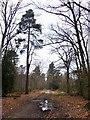 TQ0182 : Black Park: the south-east corner, not far from Dracula's castle by Stefan Czapski