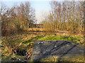 SJ7399 : Bridgewater Canal by David Dixon