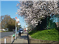 TQ2288 : Spring at bus stand Z1 by Robin Webster