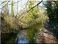 SU0394 : River Thames, west of Ashton Keynes by Brian Robert Marshall