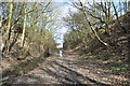 SK4270 : Duckmanton Railway Cutting - View East by Ashley Dace